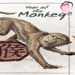 كل ما يخص برج القرد الصيني (التوافق،العاطفة،المال،الصحة،المشاهير)
