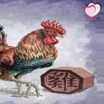 كل ما يخص برج الديك الصيني (التوافق،العاطفة،المال،الصحة،المشاهير)